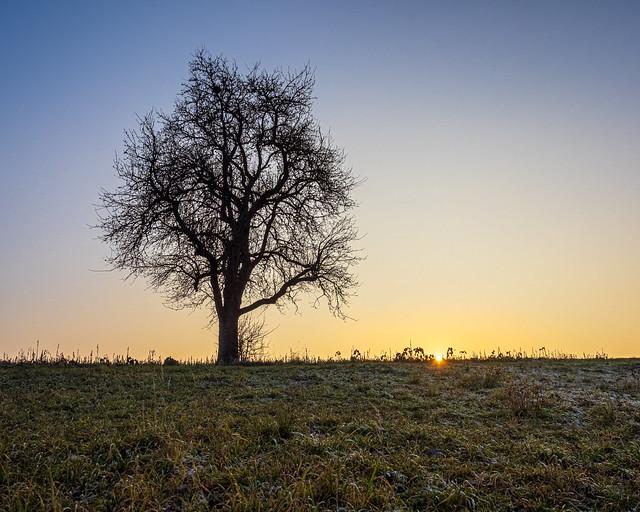 Winter Evening II