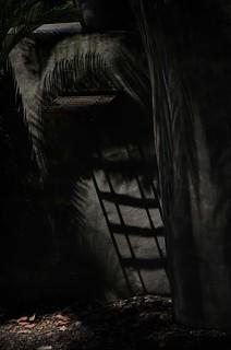 Cycad Shadows