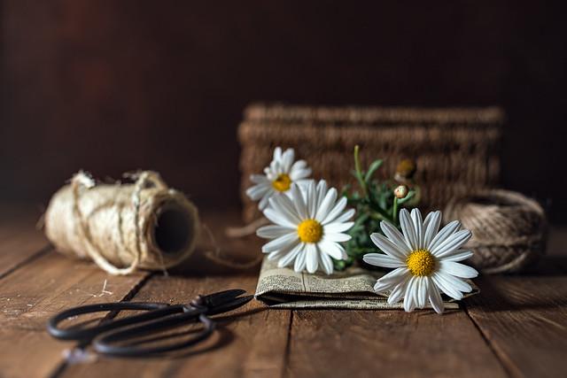 """Pruning daisies"""