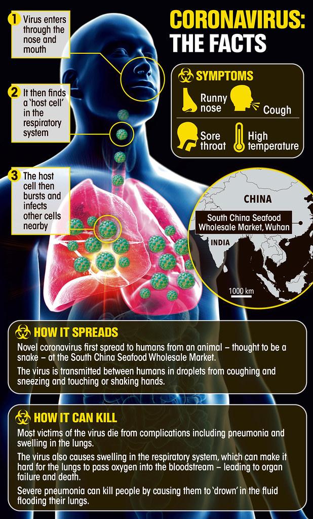 How the novel Coronavirus infects ... Source - https://www.thesun.co.uk/wp-content/uploads/2020/01/tp-graphic-corona-virus-2155.jpg?_gl=1*jip7cv*_ga*VEhYRWFuQmRja1hYdVhNNUlnY2xLUXR5Y2ZHdkVSUVh2d3FONEd3QmhnQkFPbFc0ai1IOHotU0FqbVlfZkE4Mg..