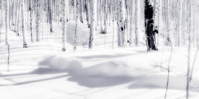 Snowdrifts in Aspen Forest