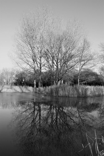 pond water lake tree reflection still landscape downham norfolk englad