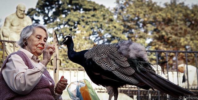 La signora e il pavone