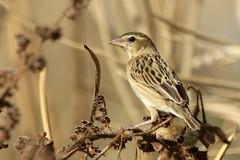 Finch-7D2_8561-001
