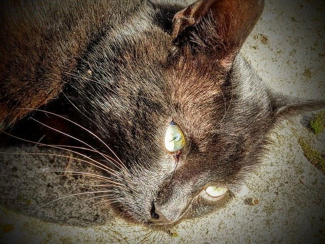 My Lovely Milo  (3)