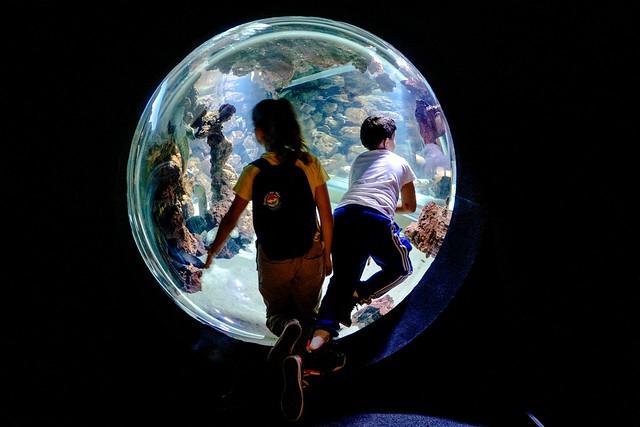 At the Aquarium / En el Acuario