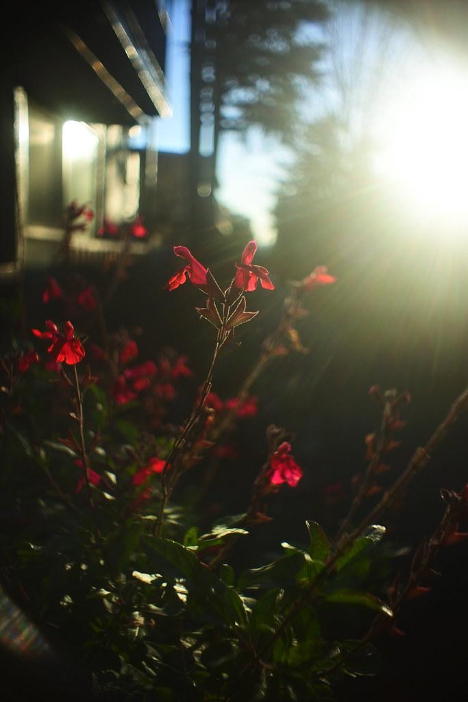 Nikon 1 j5 p.angenieux 10mm