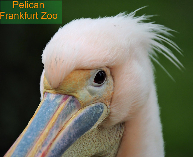 Germany - Bird in the Zoo Frankfurt am Main