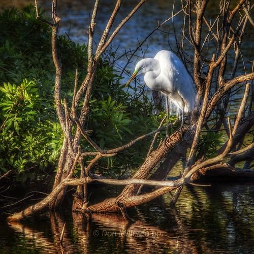 birds naturelovers nature d810 landscapes softlight morninglight