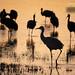 Sandhill Cranes Silhouettes