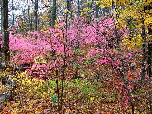 Fall Bush Colors
