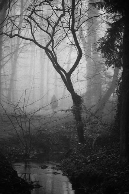 Inside the fog~