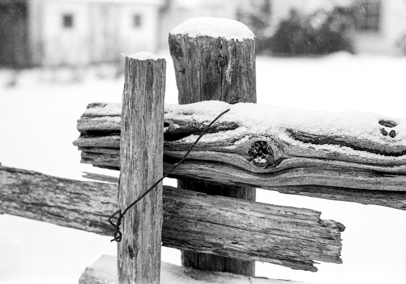 Snow Covered Fence Post 2020