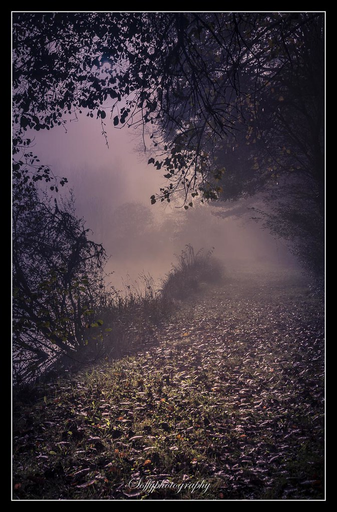 The way in the mist