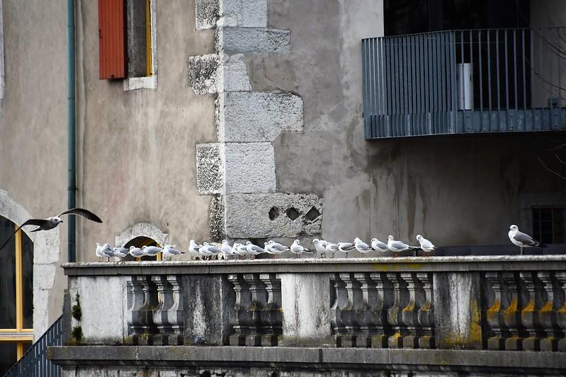 30.01.2020 Baselstrasse Altstadt (51)