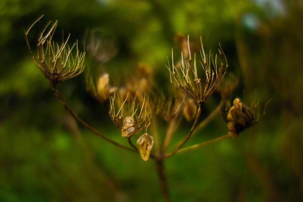 last seeds - Devon - Oct 2019