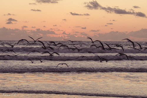 birds flight ocean water waves sunrise sky clouds pink reflections saintaugustine beach nature canon outstandingromanianphotographers coth5 ngc npc