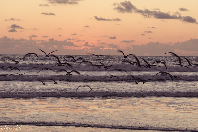 Not humans, but birds often witness the most beautiful mornings in this world