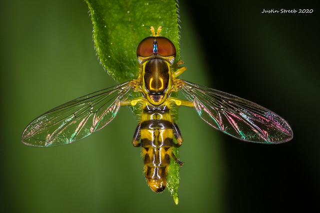 Hoverfly Stack