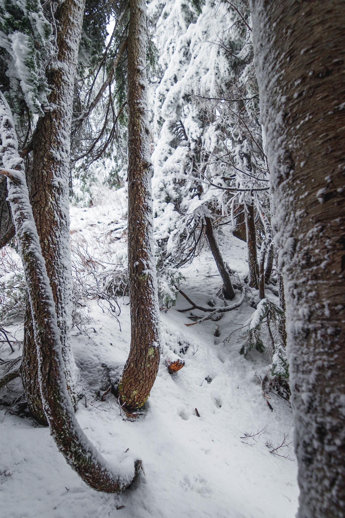 Lux Peak's woodsy north ridge