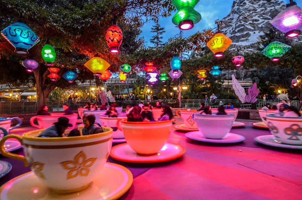 Teacups night DL