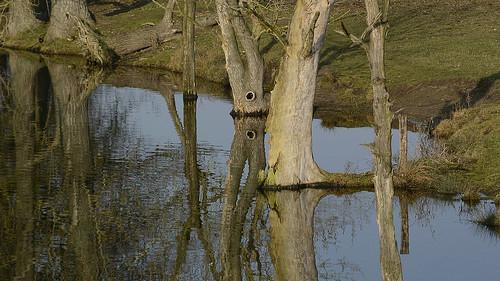 landscape wetlands windless reflection mirroring plants trees deciduoustrees seasons wintertime cutoffmeander