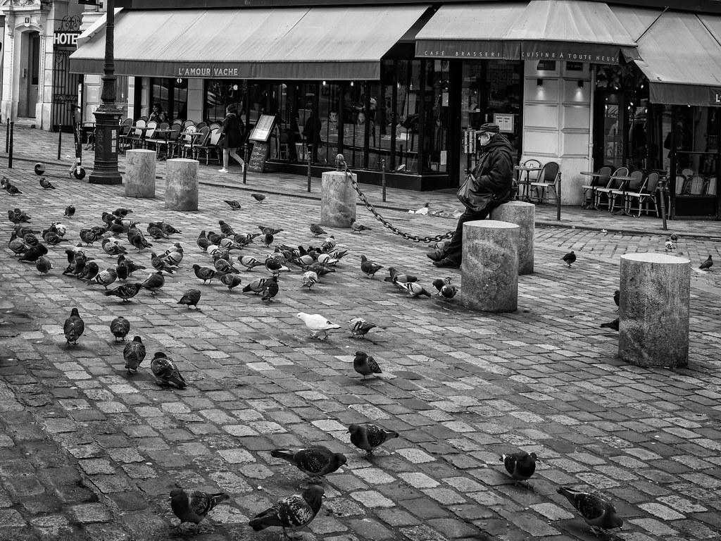 L'amour vache : l'homme et les pigeons... 49467812207_8d78b8097b_b