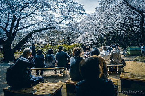 Cherry Blossom Viewing | by TheViewDeck