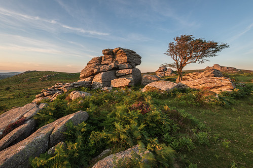 grass dartmoor sunny landscape sunset kase circularpolariser tor outdoor emsworthy weather filters clear southwest scene moor tree rocks nature equipment nationalpark sky d850 hill devon wilderness mountain cpl devonshire dusk evening grassy hillside kasefilters nikond850 polariser wood newtonabbot england unitedkingdom