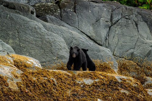 bear | by traveleatenjoyrepeat