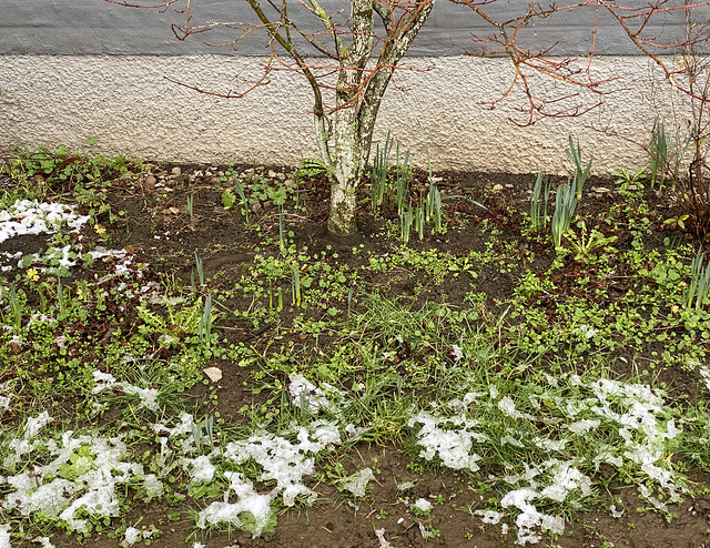 snowspring_0596