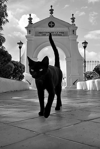 lucamarella colombia mompos cat blackcat blackandwhitwe cemetery bnw biancoenero america