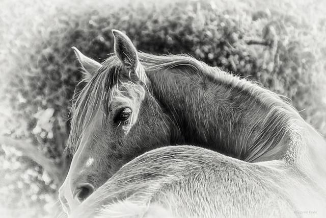 Eleganza, fierezza, libertà: un cavallo. - Elegance, pride, freedom: a horse.