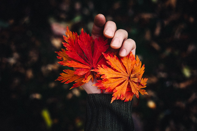 collecting pieces of autumn wherever I go