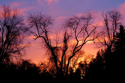 sunrise trees readington whitehouse station nj clouds