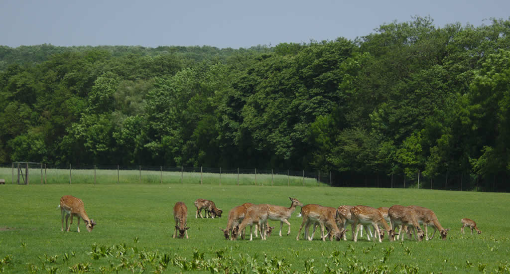 Lainzer Tiergarten | Mooistestedentrips.nl