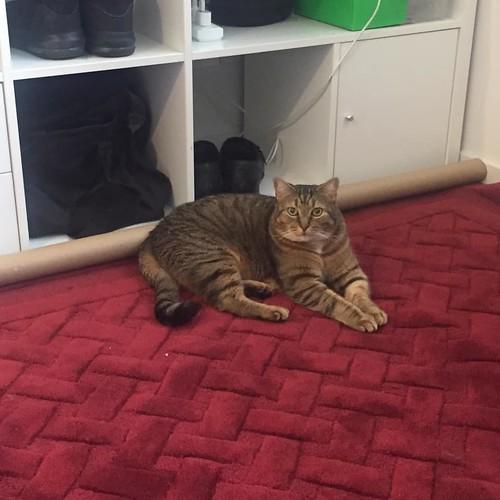 Seth likes the new rug