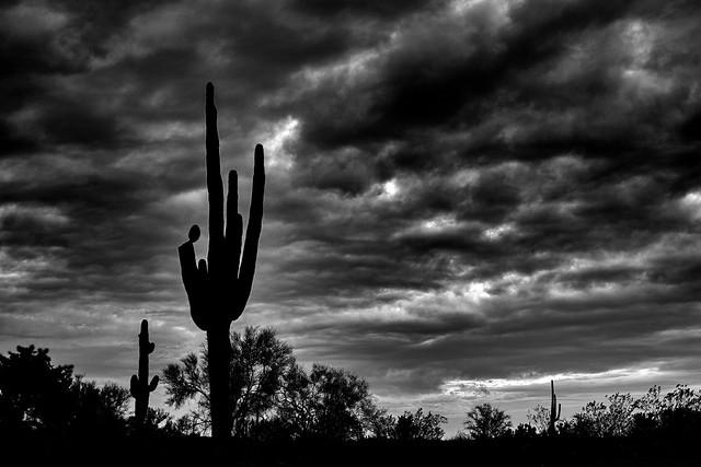 Sonoran Silhouette
