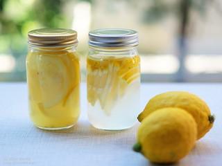 レモン酵母 20200129-DSCT8880 (3)