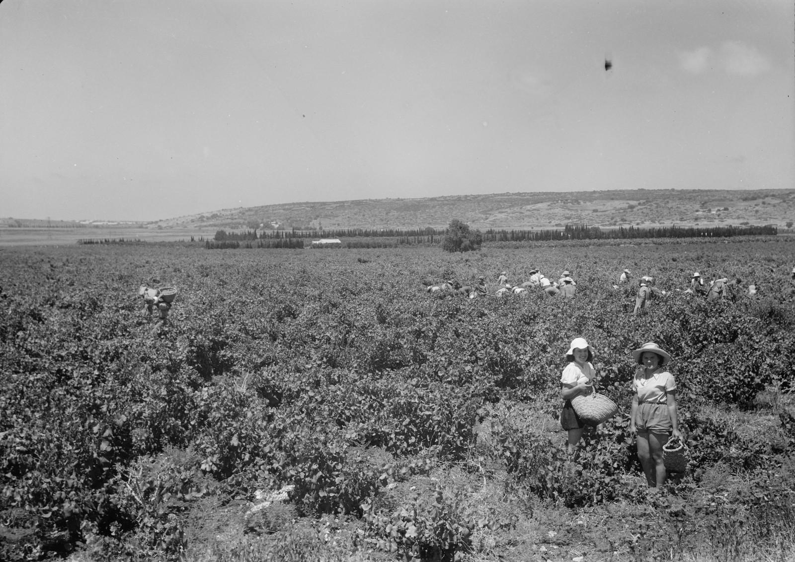 08. В поле