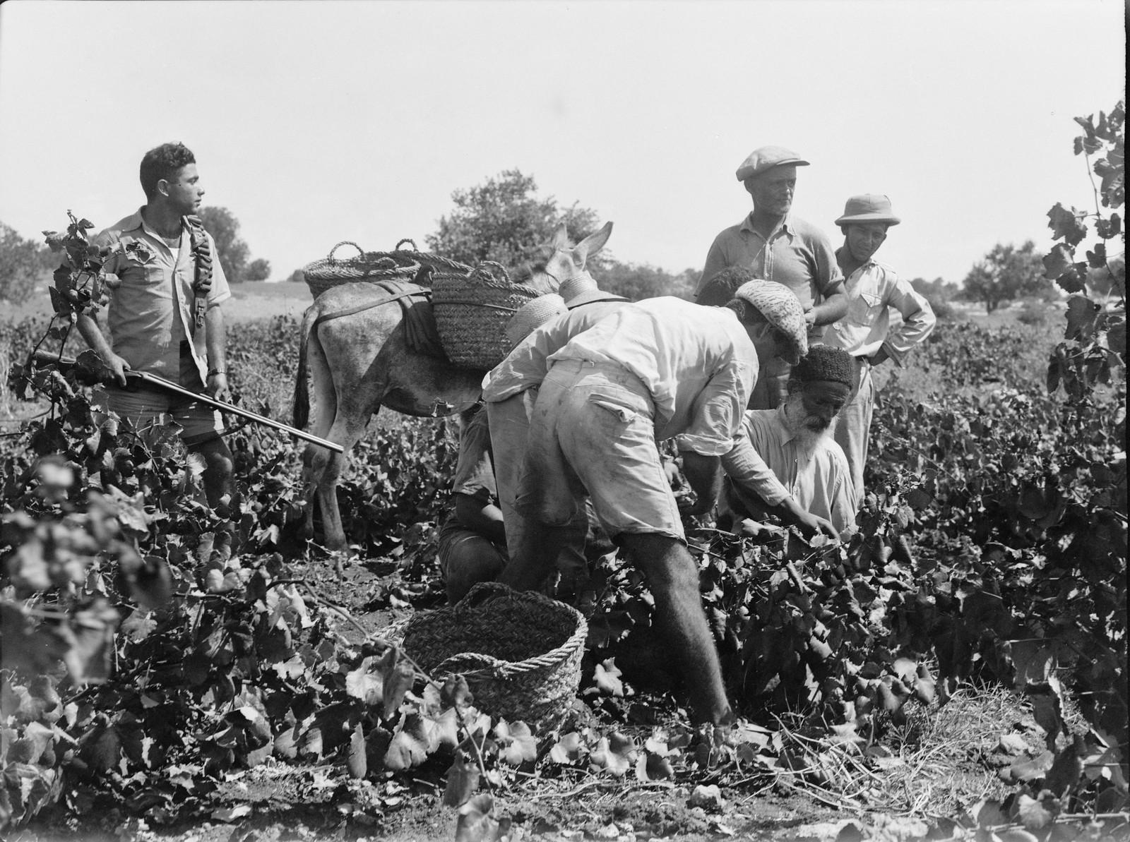 10. Уборка урожая