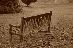 Winter Chair Sepia