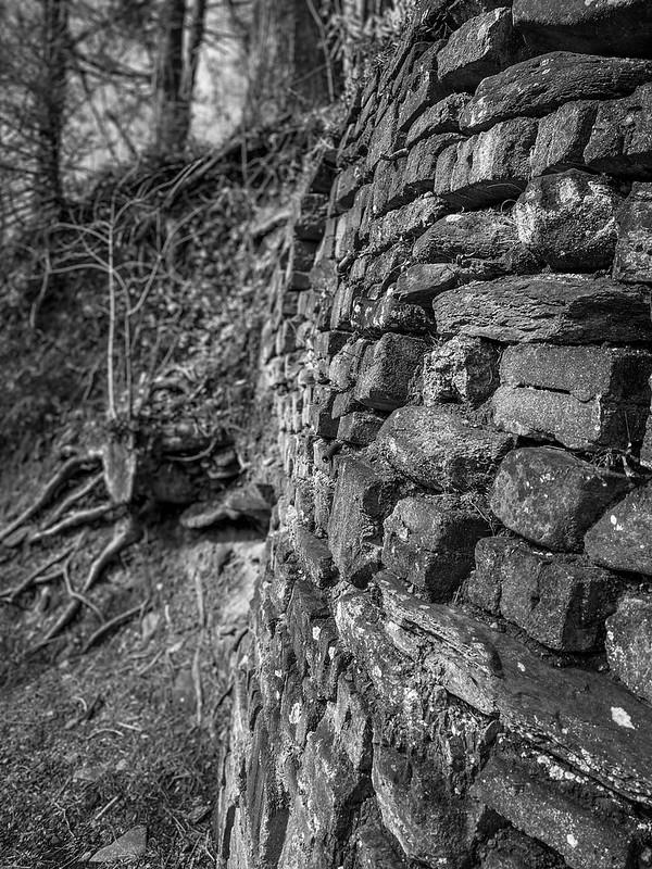 stone wall, hillside, winter, Montreat, North Carolina, Apple iPhone 11, 2.1.20