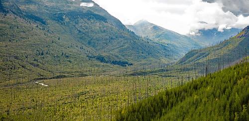 montana glacier county goingtothesunhighway glaciernationalpark clouds sky mountains lewismountains trees wildfire trappercreekfire mcdonaldcreek glaciercarvervalley ushapedvalley fire regrowth snag