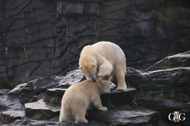 Besuch Tierpark Friedrichsfelde 21.12.1977