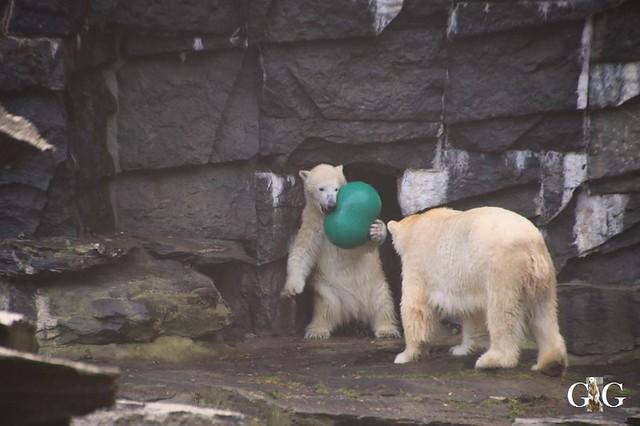 Besuch Tierpark Friedrichsfelde 21.12.1911