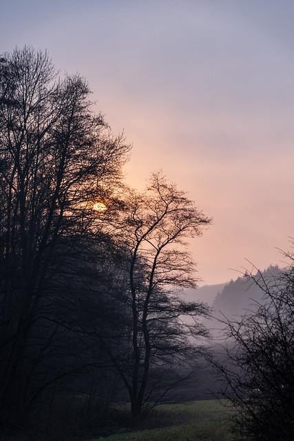 Hinter den Bäumen geht die Sonne unter / The sun sets behind the trees