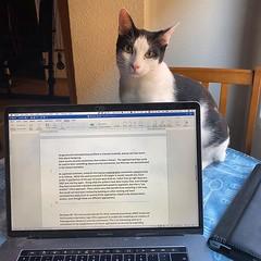 Deja de hacer cosas con el ordenador y préstame atención.... :sweat_smile: