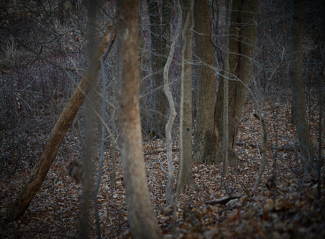 with trees, afternoon light on branches and trunks, Somers, WI, USA, 12-15-19 4