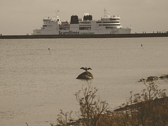 The ferry Deutschland from Scandlines in Puttgarden   12. September 2017   Fehmarn - Schleswig-Holstein - Deutschland